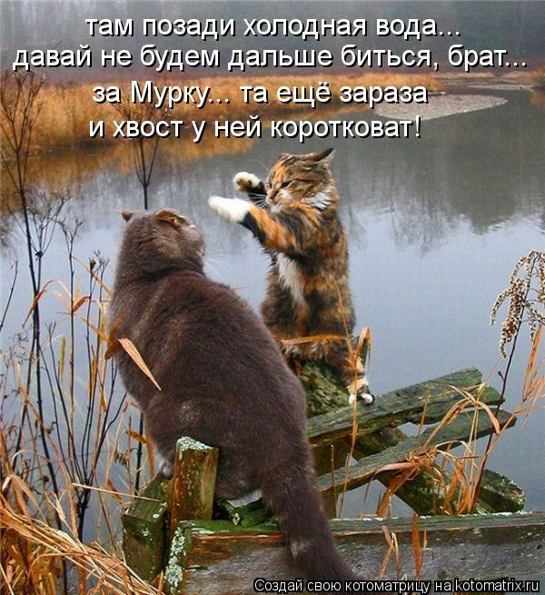 Котоматрица: там позади холодная вода... давай не будем дальше биться, брат... за Мурку... та ещё зараза и хвост у ней коротковат!