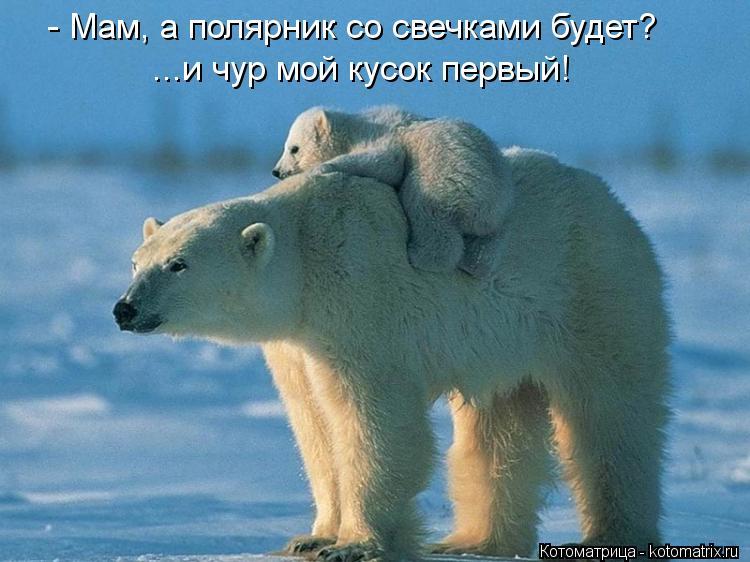 Котоматрица: - Мам, а полярник со свечками будет? ...и чур мой кусок первый!