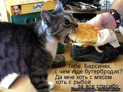 Котоматрица: Тебе, Барсичек,  с чем еще бутербродик? Да мне хоть с мясом хоть с рыбой за все спасибо