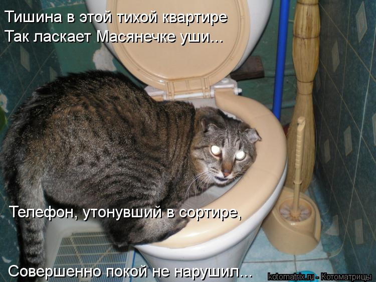 Котоматрица: Телефон, утонувший в сортире,  Совершенно покой не нарушил... Так ласкает Масянечке уши... Тишина в этой тихой квартире