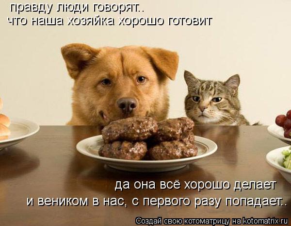 Котоматрица: правду люди говорят.. что наша хозяйка хорошо готовит да она всё хорошо делает и веником в нас, с первого разу попадает..