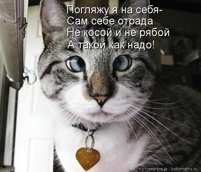 Котоматрица: Погляжу я на себя- Сам себе отрада Не косой и не рябой А такой как надо!