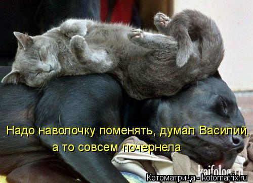 Котоматрица: Надо наволочку поменять, думал Василий, а то совсем почернела