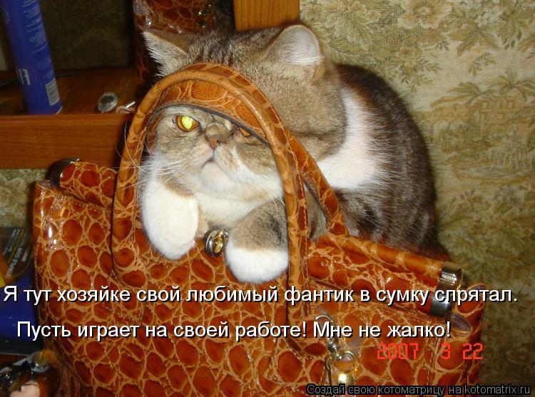Котоматрица: Я тут хозяйке свой любимый фантик в сумку спрятал.  Пусть играет на своей работе! Мне не жалко!