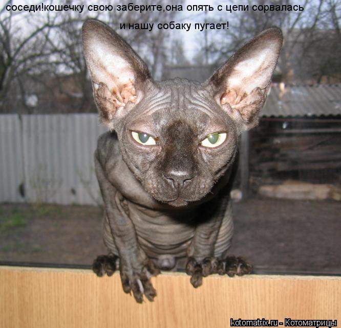 Котоматрица: и нашу собаку пугает! соседи!кошечку свою заберите,она опять с цепи сорвалась