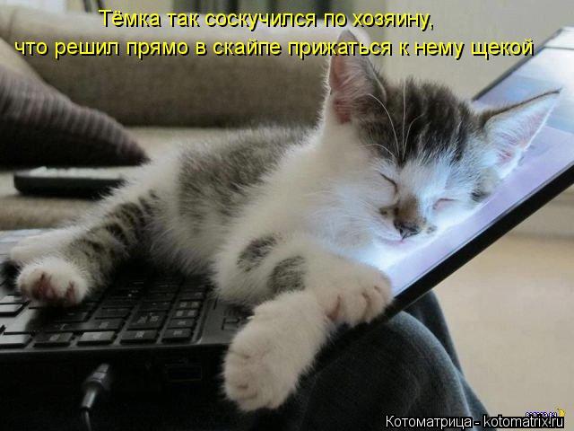 Котоматрица: что решил прямо в скайпе прижаться к нему щекой что решил прямо в скайпе прижаться к нему щекой Тёмка так соскучился по хозяину,