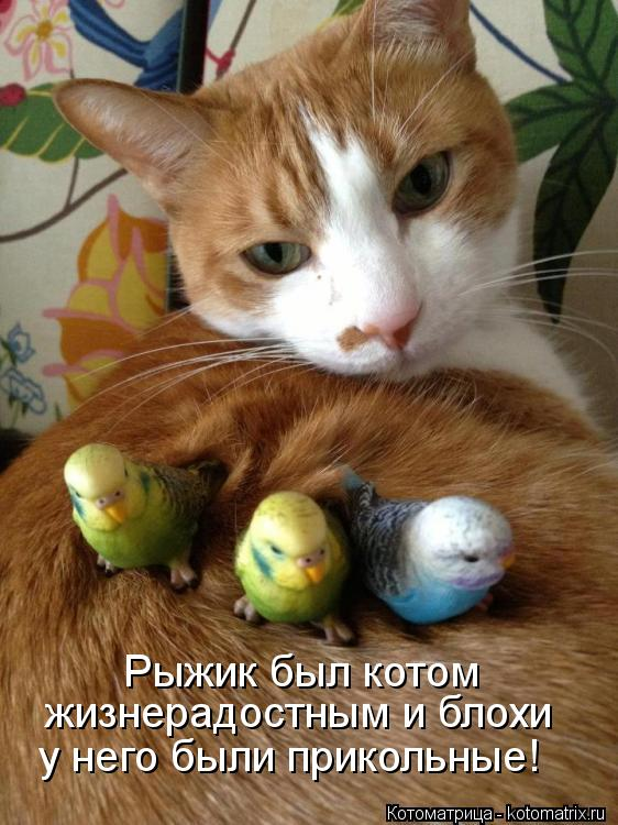 Котоматрица: Рыжик был котом  жизнерадостным и блохи у него были прикольные!