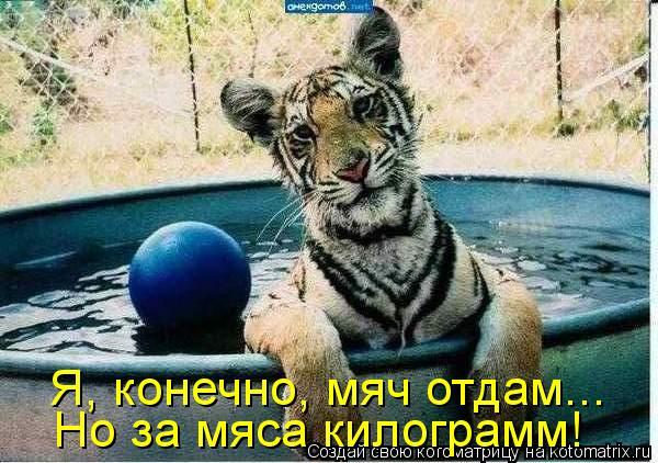 Котоматрица: Я, конечно, мяч отдам... Но за мяса килограмм!