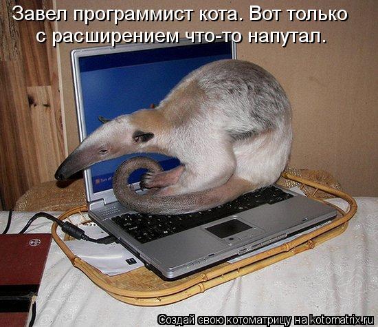 Котоматрица: Завел программист кота. Вот только с расширением что-то напутал.