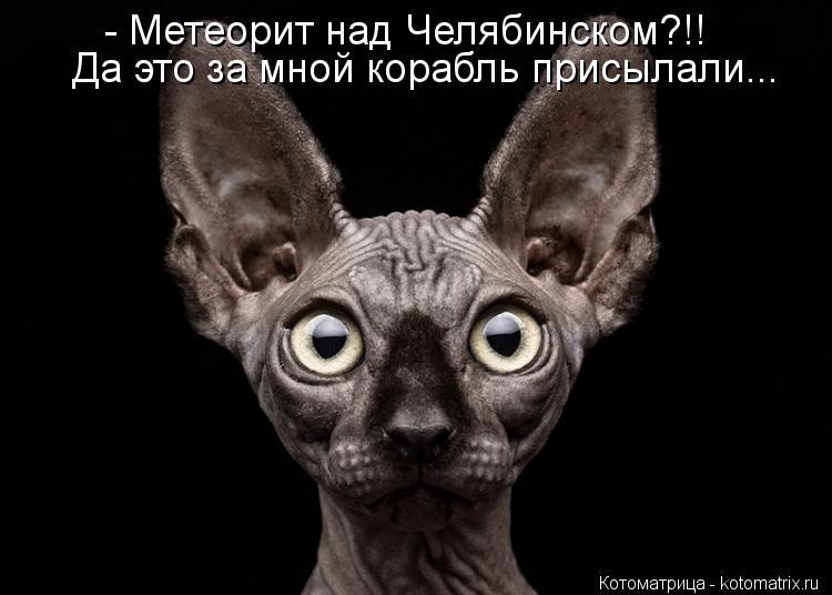 Котоматрица: - Метеорит над Челябинском?!! Да это за мной корабль присылали...