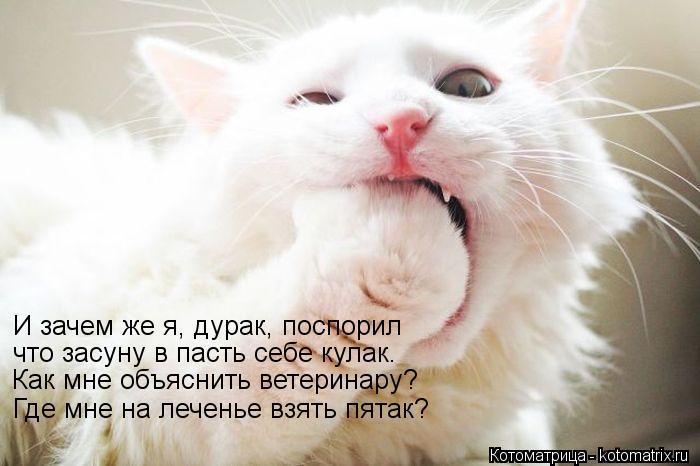 Котоматрица: И зачем же я, дурак, поспорил что засуну в пасть себе кулак. Как мне объяснить ветеринару? Где мне на леченье взять пятак?