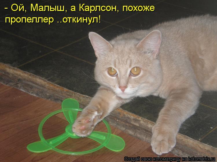 Котоматрица Kotomatritsa_w0