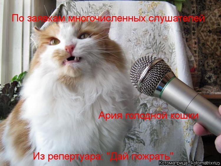 """Котоматрица: По заявкам многочисленных слушателей Ария голодной кошки Из репертуара: """"Дай пожрать"""""""