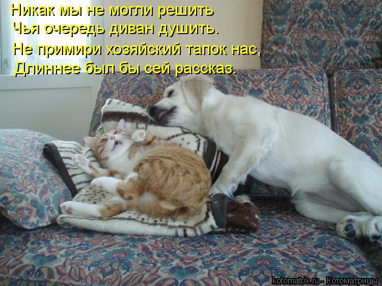 Котоматрица: Никак мы не могли решить Чья очередь диван душить. Не примири хозяйский тапок нас, Длиннее был бы сей рассказ.