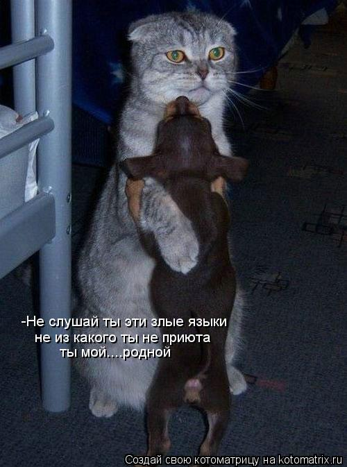 Котоматрица: -Не слушай ты эти злые языки не из какого ты не приюта ты мой....родной