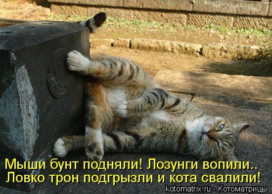 Котоматрица: Мыши бунт подняли! Лозунги вопили.. Ловко трон подгрызли и кота свалили!