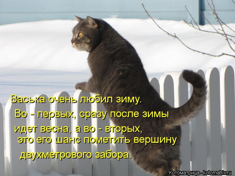 Котоматрица: Васька очень любил зиму. Во - первых, сразу после зимы идет весна, а во - вторых, двухметрового забора. это его шанс пометить вершину