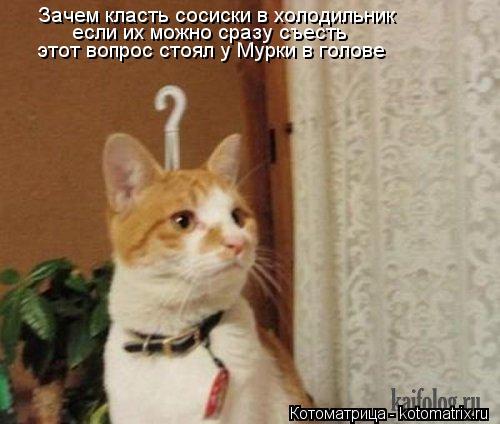 Котоматрица: Зачем класть сосиски в холодильник если их можно сразу съесть этот вопрос стоял у Мурки в голове