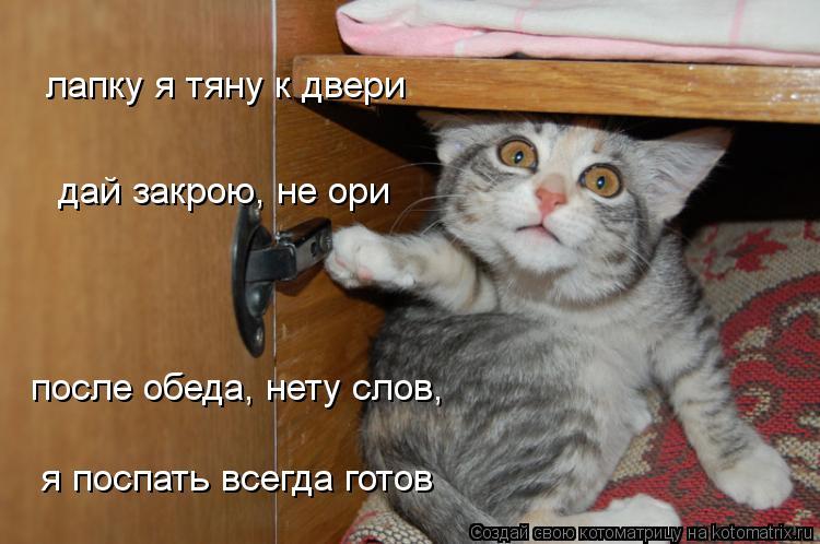 Котоматрица: лапку я тяну к двери дай закрою, не ори после обеда, нету слов, я поспать всегда готов