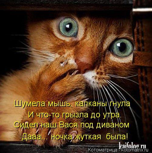 Котоматрица: Шумела мышь, капканы гнула И что-то грызла до утра. Сидел наш Вася под диваном Дааа... ночка жуткая  была!