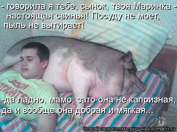 Котоматрица: - говорила я тебе, сынок, твоя Маринка - настоящая свинья! Посуду не моет,  пыль не вытирает! -да ладно, мамо, зато она не капризная, да и вообще