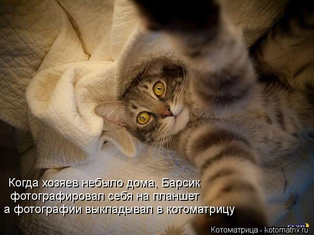 Котоматрица: Когда хозяев небыло дома, Барсик фотографировал себя на планшет а фотографии выкладывал в котоматрицу