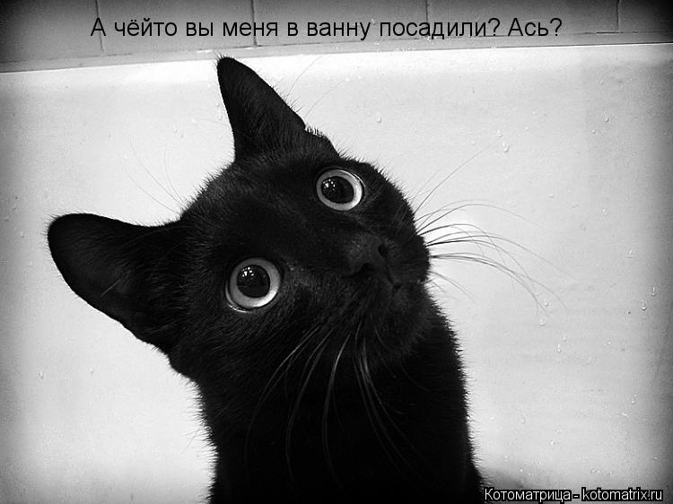 Котоматрица: А чёйто вы меня в ванну посадили? Ась?