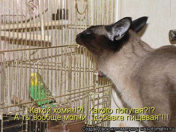 """Котоматрица: Какой хомяк!?!  Какого попугая?!? А ты вообще молчи, """"добавка пищевая""""!!!"""