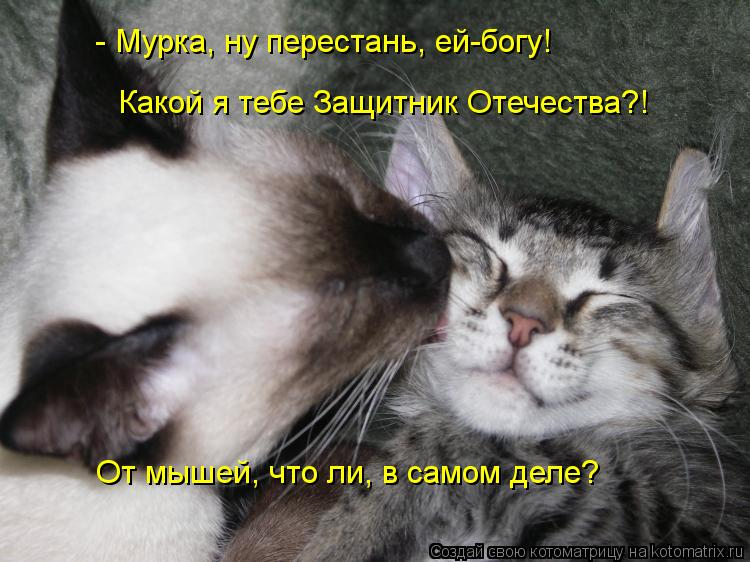 Котоматрица: - Мурка, ну перестань, ей-богу! Какой я тебе Защитник Отечества?! От мышей, что ли, в самом деле?