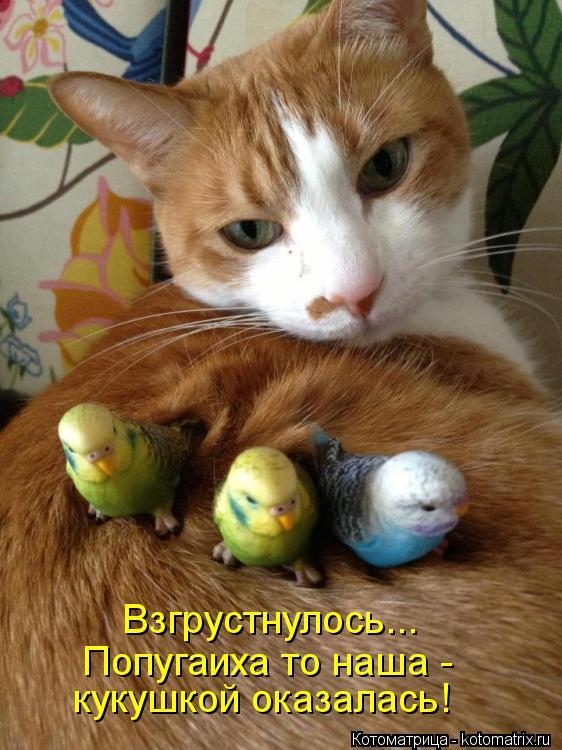 Котоматрица: Взгрустнулось... Попугаиха то наша - кукушкой оказалась!