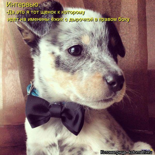Котоматрица: Интервью: -Да,это я тот щенок к которому идёт на именины ёжик с дырочкой в правом боку