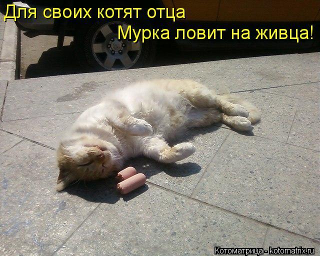 Котоматрица: Для своих котят отца  Мурка ловит на живца!