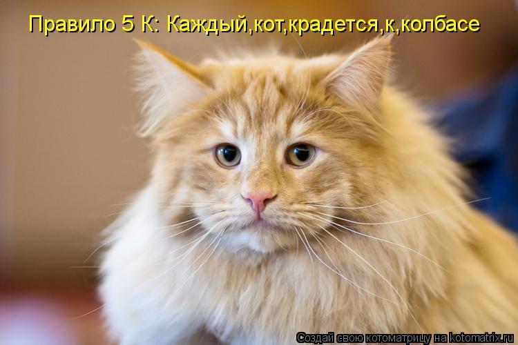 Котоматрица: Правило 5 К: Каждый,кот,крадется,к,колбасе