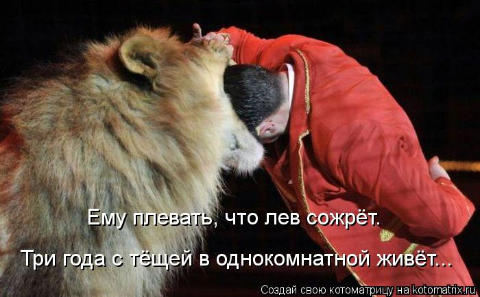 Котоматрица: Ему плевать, что лев сожрёт. Три года с тёщей в однокомнатной живёт...