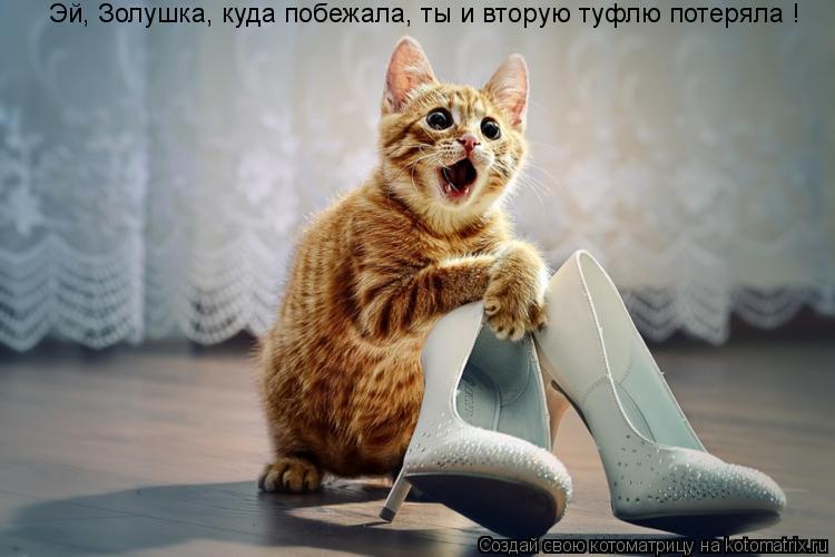 Котоматрица: Эй, Золушка, куда побежала, ты и вторую туфлю потеряла !