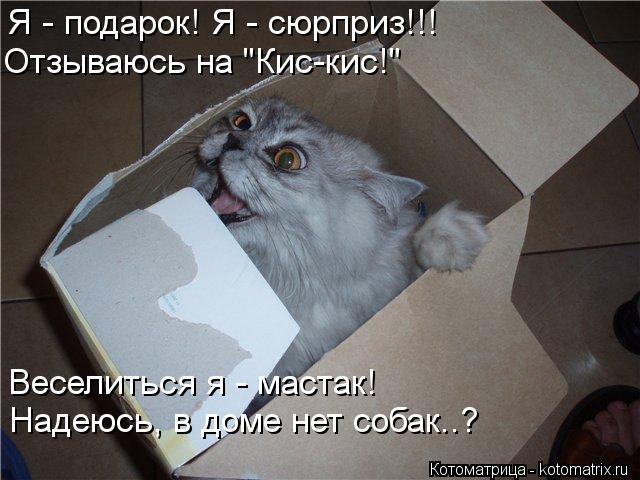 """Котоматрица: Я - подарок! Я - сюрприз!!! Отзываюсь на """"Кис-кис!"""" Веселиться я - мастак! Надеюсь, в доме нет собак..?"""