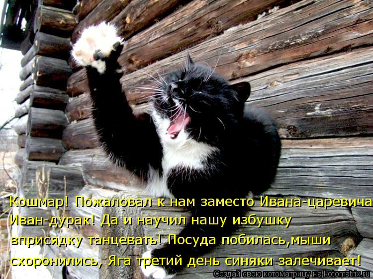Котоматрица: Кошмар! Пожаловал к нам заместо Ивана-царевича Иван-дурак! Да и научил нашу избушку  вприсядку танцевать! Посуда побилась,мыши  схоронились,