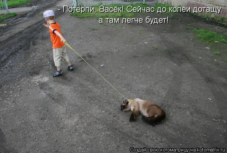 Котоматрица: - Потерпи, Васёк! Сейчас до колеи дотащу,  а там легче будет!