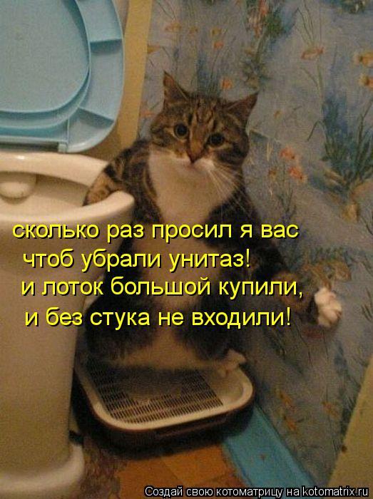 Котоматрица: cколько раз просил я вас чтоб убрали унитаз! и лоток большой купили, и без стука не входили!