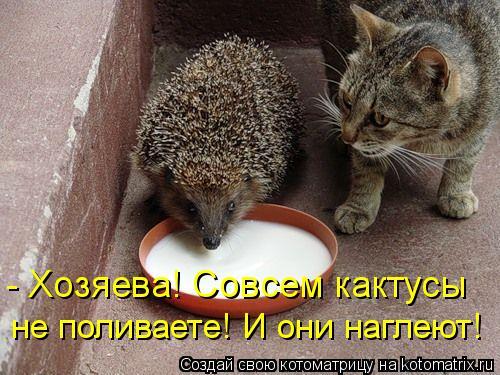 Котоматрица: - Хозяева! Совсем кактусы  не поливаете! И они наглеют!