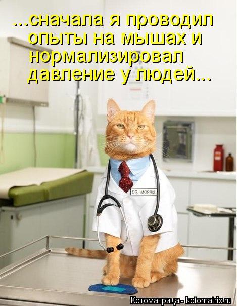 Котоматрица: ...сначала я проводил  опыты на мышах и нормализировал давление у людей...