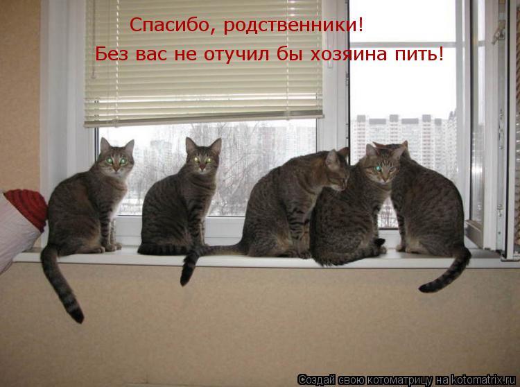 Котоматрица: Спасибо, родственники!  Без вас не отучил бы хозяина пить!