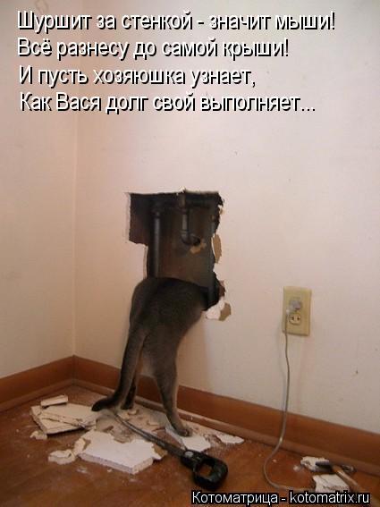 Котоматрица: Шуршит за стенкой - значит мыши! Всё разнесу до самой крыши! И пусть хозяюшка узнает, Как Вася долг свой выполняет...