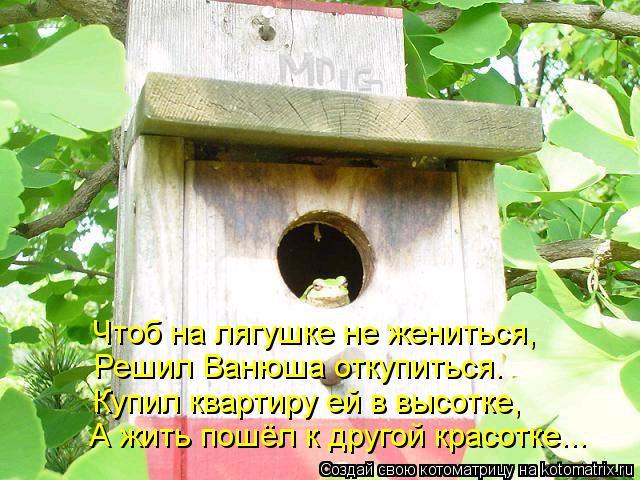 Котоматрица: Чтоб на лягушке не жениться, Решил Ванюша откупиться. Купил квартиру ей в высотке, А жить пошёл к другой красотке...