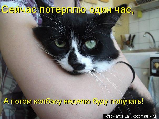 Котоматрица: Сейчас потерплю один час, А потом колбасу неделю буду получать!