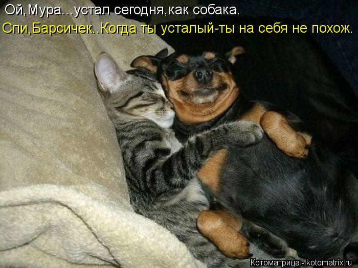 Котоматрица: Ой,Мура...устал сегодня,как собака. Спи,Барсичек..Когда ты усталый-ты на себя не похож.
