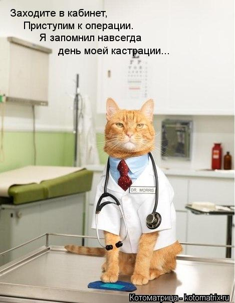 Котоматрица: Заходите в кабинет, Приступим к операции. Я запомнил навсегда день моей кастрации...