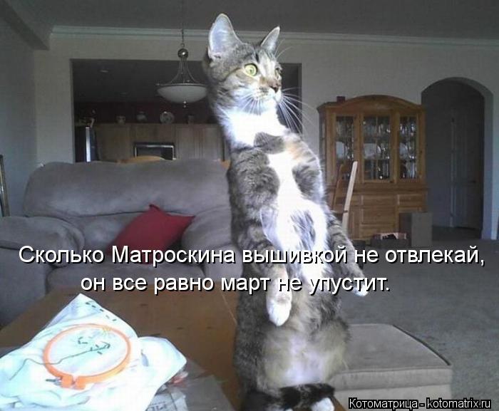 Котоматрица: Сколько Матроскина вышивкой не отвлекай, он все равно март не упустит.