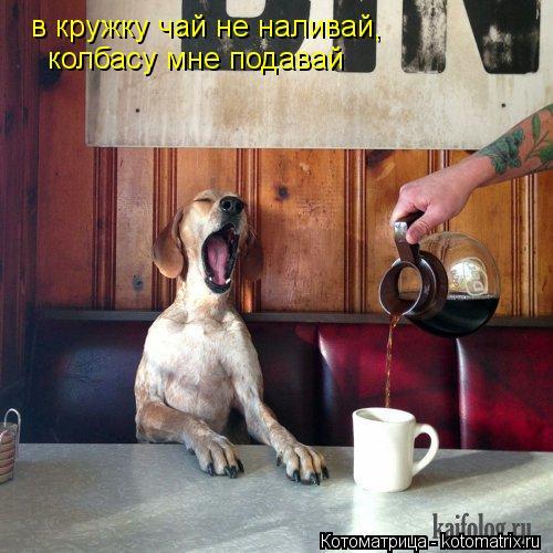 Котоматрица: в кружку чай не наливай, колбасу мне подавай
