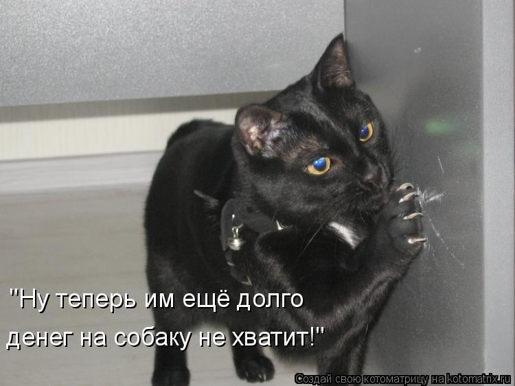 """Котоматрица: """"Ну теперь им ещё долго денег на собаку не хватит!"""""""